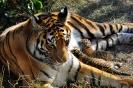 Сафари-парк Тайган_1