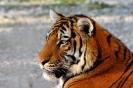 Сафари-парк Тайган _4