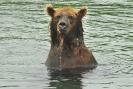 Медведи Камчатки_10