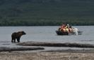 Медведи Камчатки_1