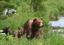 Медведи Камчатки _1