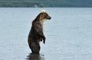Медведи Камчатки_3