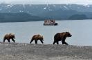Медведи Камчатки_5