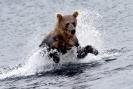 Медведи Камчатки _7