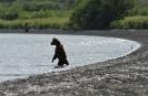 Медведи Камчатки _8