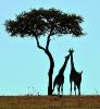 Дикие звери Африки